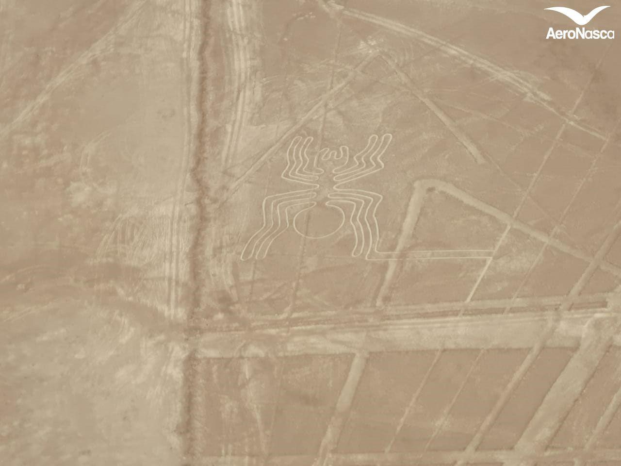 Imagenes de las Lineas de Nazca: Araña
