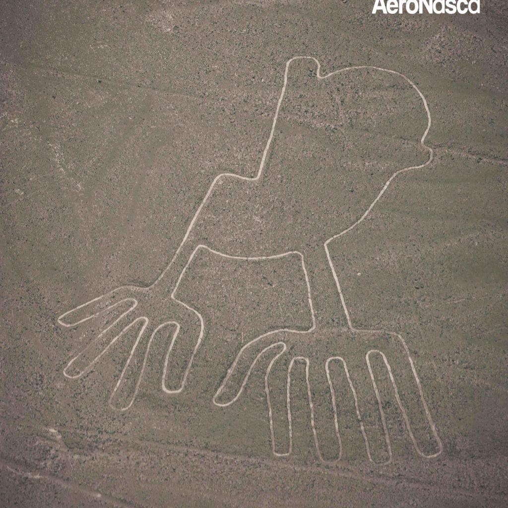 Impresionantes Fotos de las Lineas de Nazca