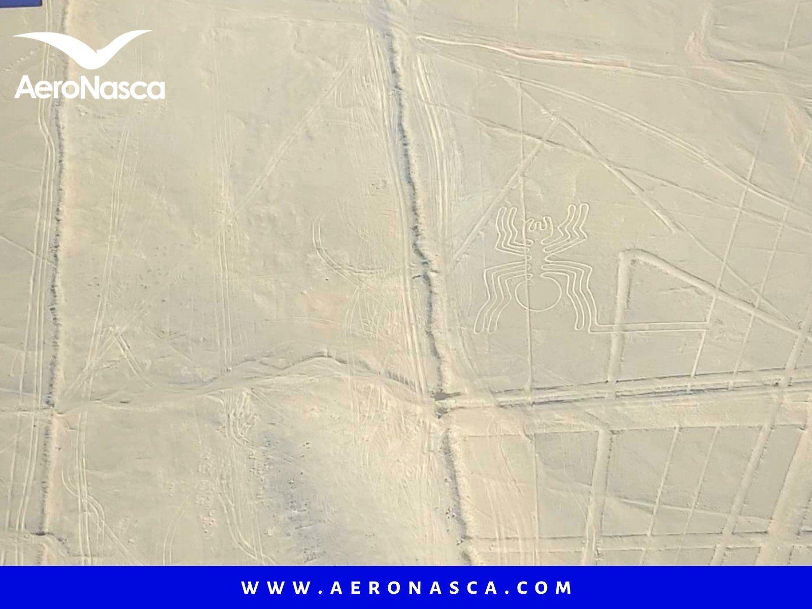 Lineas de Nazca Araña