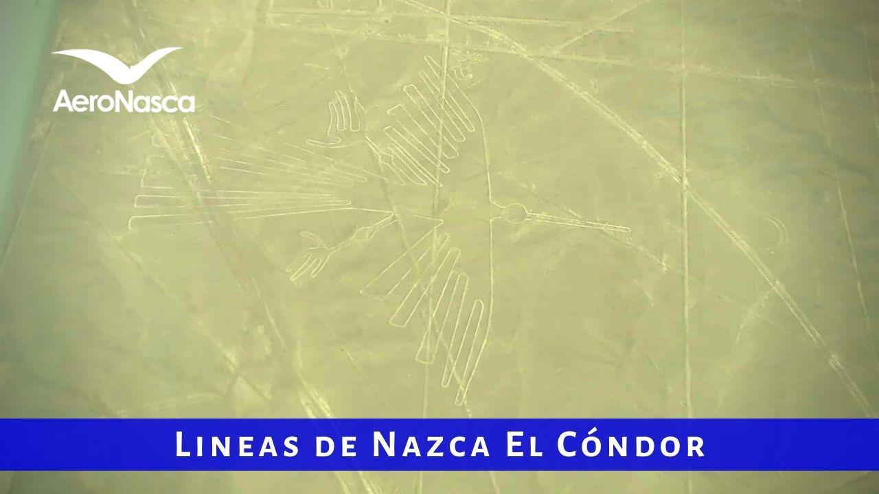 Lineas De Nazca Condor