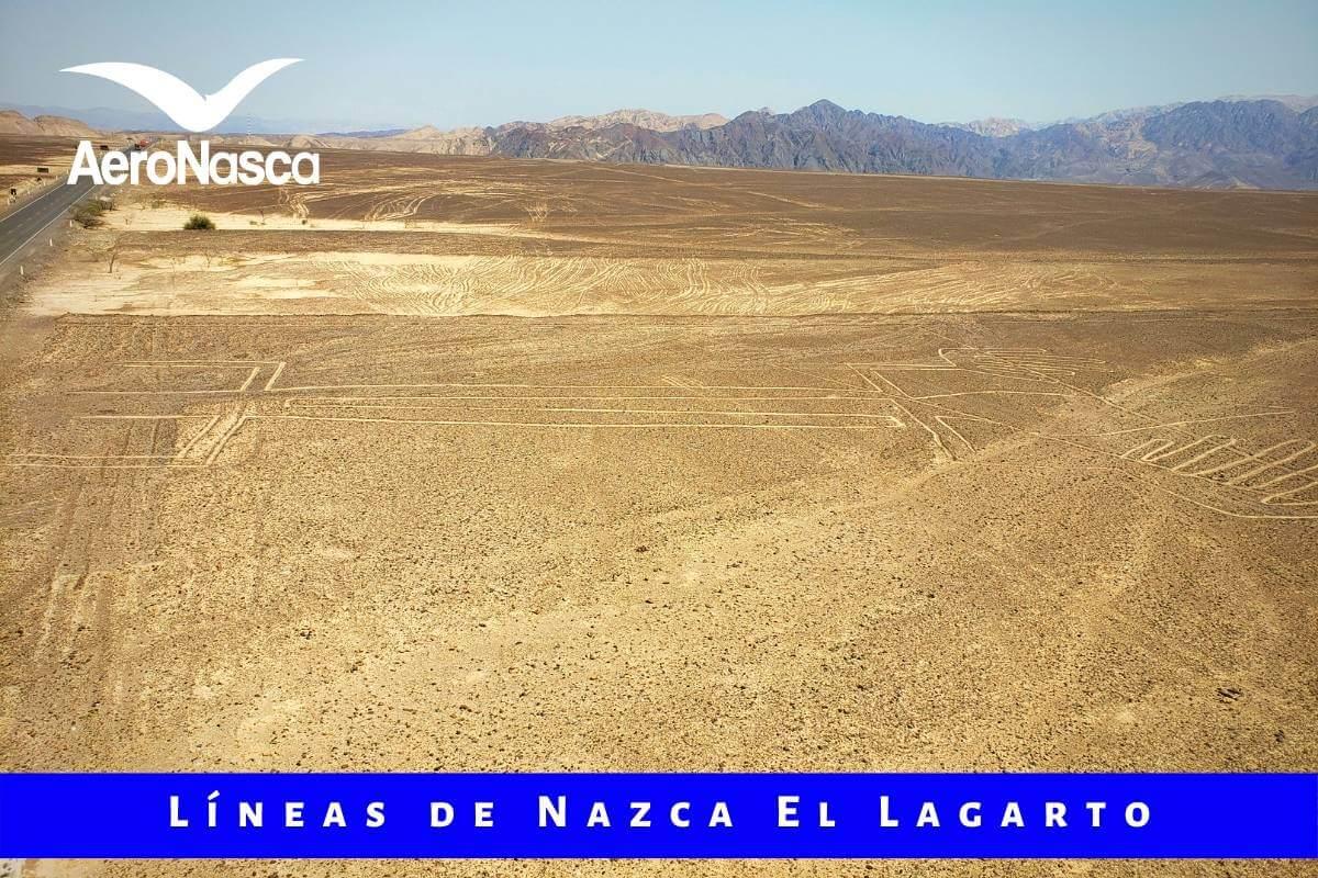 Lineas De Nazca El Lagarto