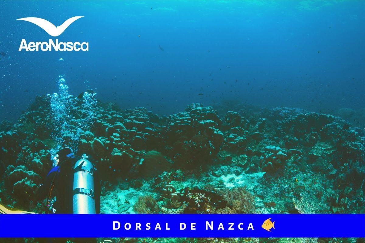 Dorsal De Nazca