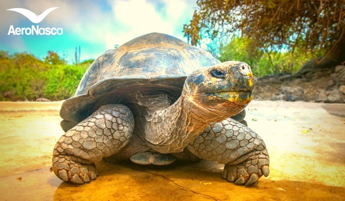 Isole Galapagos in Ecuador