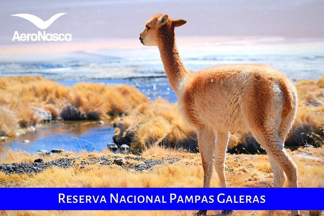 Pampas Galeras